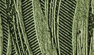 Leaf Green 360 61 1 300x177 - Colour wash plant glazes