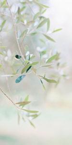 winwall olive 1 150x300 - Winwall