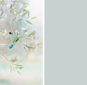winwall olive greygreen 300x294 - Winwall